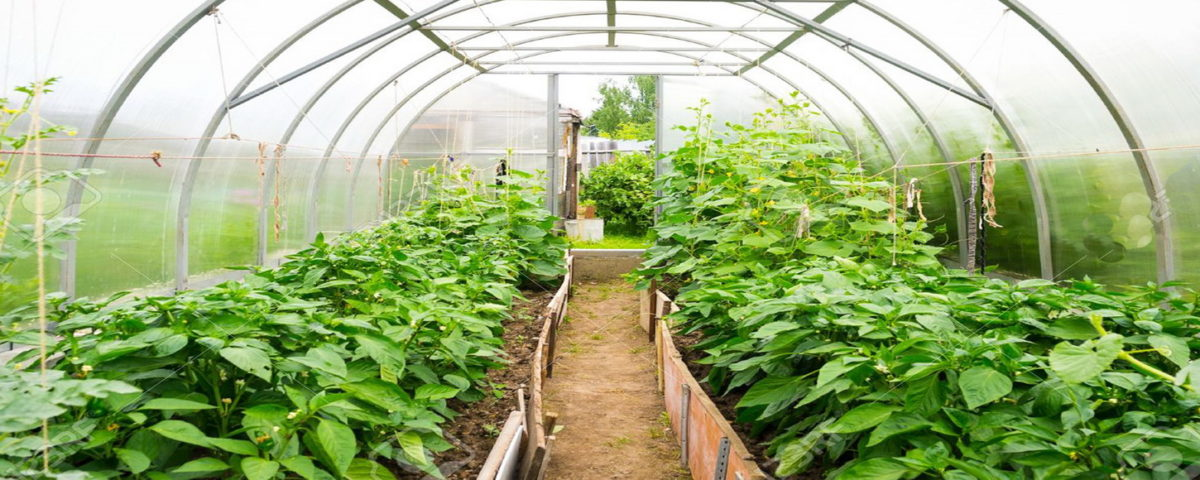 smart farming and agriculture